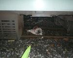 TP.HCM: Xe lửa cán chết người