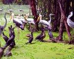 Vườn chim Bạc Liêu có nhiều loài chim quý hiếm