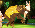 Xiếc thú, nhìn từ sự cố voi Na
