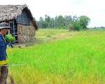 Lên Sài Gòn làm... nông dân