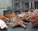 Vỏ ốc và cát Hoàng Sa triển lãm ở Hà Nội