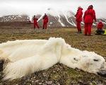 Phát hiện gấu Bắc cực chết đói