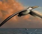 Phát hiện hóa thạch loài chim lớn nhất thế giới