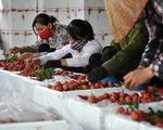 Thúc đẩy công nghiệp chế biến nông sản