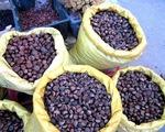 Ngược Cao Bằng tìm ăn hạt dẻ Trùng Khánh