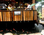 """Độc đáo quán cafe cá Koi """"khủng"""" ở Sài Gòn"""