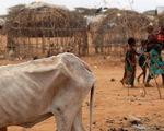 Hạn hán kéo dài khiến nạn đói lan rộng ở Nam châu Phi
