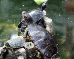 Hà Nội phát động diệt trừ các loài ngoại lai xâm hại môi trường