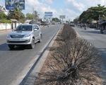 Bốn tháng không người tưới, hàng trăm cây xanh chết khô