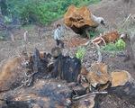 Thủ tướng chỉ đạo: Kiên quyết đóng cửa rừng để cứu rừng