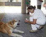 Cảm động chó chờ chủ suốt 6 ngày ngoài bệnh viện