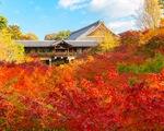 Quá tải khách đến mùa thu, ngôi đền Nhật cấm chụp ảnh