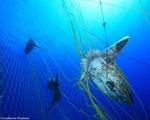 EP cấm đánh bắt hải sản dưới độ sâu 800m ở đông bắc Đại Tây Dương