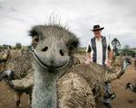 Bật cười với ảnh selfie của động vật