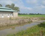 Đồng Tháp khẳng định dự án trồng sen