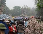 Đội mưa ngắm hoa anh đào
