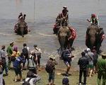 Một lễ hội đua voi - 500 thợ chụp ảnh, vô số flycam