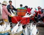 Giây phút ngư dân chạm mặt mẻ cá bè 6 tỉ đồng