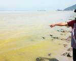 Vệt nước vàng ở biển Chân Mây do tảo tạo ra