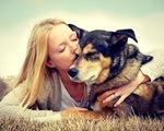 Nguy cơ nhiễm sán chó ở người