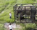 capture png 1501039003 - Ở Lào nuôi hổ đem bán dễ như nuôi chó
