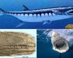 Quái vật biển giống cá mập trắng