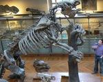Phát hiện hóa thạch con lười khổng lồ tại Mexico