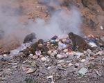 Khi khỉ Sơn Trà ăn rác