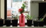 Bình hoa có thể chữa cháy trong tích tắc