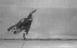 Bất ngờ chim sáo bơi điệu nghệ trong nước