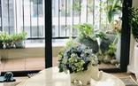 Cuộc thi 'Nhà tôi - Mái ấm': Bancông xanh - khoảng trời nhỏ bình yên của gia đình tôi