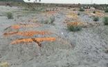 Hết thả trôi sông, Ấn Độ bàng hoàng phát hiện nhiều thi thể vùi trong cát bờ sông Hằng