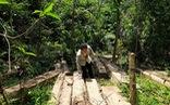 Tìm thấy bãi gỗ lâm tặc giấu giữa rừng già chờ cơ hội đưa ra ngoài