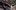 Video: Highlights Akeem Scott không 'dệt' nổi mùa xuân cho Danang Dragons