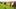 Thanh Hóa: Cánh đồng hoa cải hút du khách tham quan
