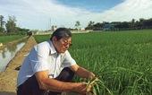 Anh hùng lao động Hồ Quang Cua - người tìm đẳng cấp gạo Việt