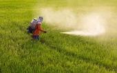 Thái Lan cấm 3 loại hóa chất độc hại trong sản xuất nông nghiệp