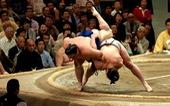 Mỡ võ sĩ sumo nặng cả trăm kg, khác mỡ người béo phì