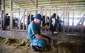 Đã có thể mua sữa tươi chuẩn A2 ngay tại Việt Nam
