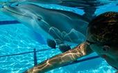 Mỹ chế tạo cá heo robot biểu diễn tại công viên giải trí