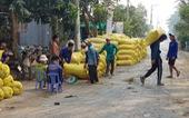 An Giang kiến nghị cho xuất khẩu gạo cứu nông dân và doanh nghiệp