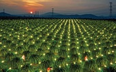 Điện khí hóa nông thôn: Những con số biết nói