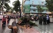 Đi đường bị cây xanh ngã đè: ai chịu trách nhiệm?