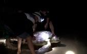 Thả rùa nặng 120kg về lại biển