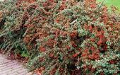 Phát hiện 'siêu thực vật' hút khí ô nhiễm
