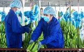 Hoàng Anh Gia Lai sửa kết quả kinh doanh, chuyển từ lãi trăm tỉ sang lỗ hơn 5.000 tỉ đồng