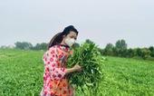 Nhà thiết kế Thuận Việt và 3 tuần cắt 15 tấn rau muống chở đến khu phong tỏa