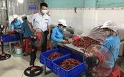Nhiều loại ớt bột nhiễm độc tố gây ung thư gan vượt mức