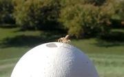 Tìm ra bí mật loài nhện biết 'bay'
