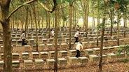EU - thị trường đầy tiềm năng cho mật ong Việt